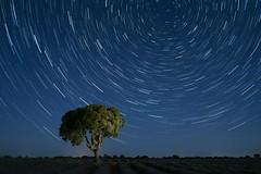 Startrail (robe_mac) Tags: lavender startrails lavanda paisaje fullframe sonya7ii sony landscape noche nocturna estrellas stars star nightscape night tree arbol startrail