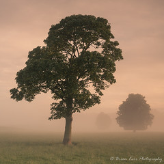 Just After Sunrise (.Brian Kerr Photography.) Tags: cumbria templesowerby sunrise mist mistymorning sky sonyuk landscapephotography photography outdoor outdoorphotography nature naturallandscape natural briankerrphotography formatthitech trees photographer photo warmth misty a7rii