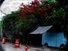 Food Truck (Carlos A. Aviles) Tags: ponce poncepuertorico puertorico flamboyan