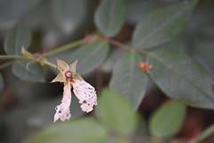 Polillas en la umbría de la riera (esta_ahi) Tags: morrocurt mariposilla polilla moth lepidoptera insectos fauna fontrubí penedès barcelona spain españa испания