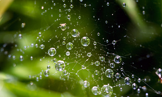 Spiderweb Droplets