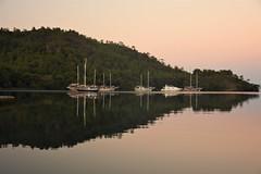 Sunrise 1 (Halil Celik) Tags: goat sunrise westcoastturkey