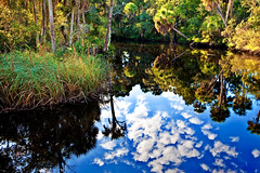 Cloud reflection in Pithlachascotee River (klauslang99) Tags: beautynature botanical clouds colorimage colourimage environment florida foliage forest forestfloor forests horizontal jamesegreypreserve landscape landscapes natural nature newportrichey nobody northamerica photography pithlachascoteeriver plant plants tree trees undergrowth wilderness woods klaus lang
