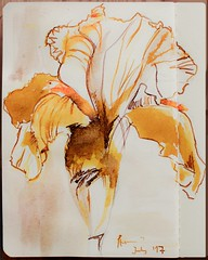 Ink Iris (StefanieJ2) Tags: iris ink yellow flower blume sketch drawing