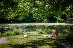 Swan Picnic (ep_jhu) Tags: nyc sitting ny ave reading fujifilm agua pond mujer prospectpark girl water swan muchacha laptop newyorkcity fuji woman brooklyn x100f blanket bird white newyork unitedstates us