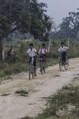 Khmer children riding bikes on their way to school (Keith Kelly) Tags: anlongklong asia cambodge cambodia enfants kh kampuchea keithkelly krakor pursatprovince southeastasia bicycle bikes children country countryside farmland keithakelly kids road rural sunrise pouthisat
