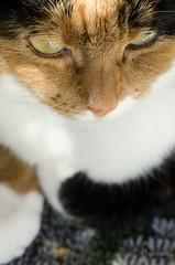 My friend (grus_p) Tags: cat sunlight spring daylight brightness friend may calmness luminanceboréale eyes paws