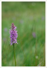 Fiore 233 (Outlaw Pete 65) Tags: macro closeup fiore flower orchidea orchid colori colours natura nature nikond600 sigma105mm breno lombardia italia
