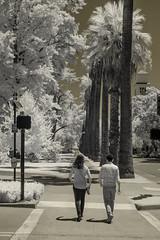California State Capitol park (atgc_01) Tags: lumix lx3 infrared ir720 kolarivision sacramento californiastatecapitol california summer heatwave