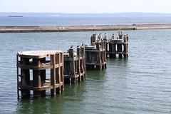 Sassnitz, Sitzplatz im Hafen (julia_HalleFotoFan) Tags: rügen inselrügen sassnitz fährhafen jasmund hafen