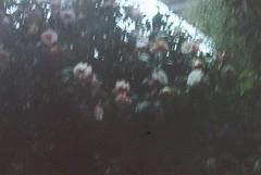 (envee.) Tags: 35mm still shoot film is dead photography analogue camera fujica stx1n kodak gold iso 200 mel 2016 winter