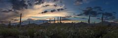 SaguaroNP Pano (svubetcha) Tags: landscape flowers arizona sunset bridge hourse mission gas utah