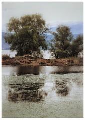 * (PattyK.) Tags: ioannina giannena giannina epirus ipiros balkans hellas ellada europe europeanunion greece grecia griechenland lake lakeside lakefront pamvotida lakepamvotida ioanninalake reflections water nikond3100 ιωάννινα γιάννενα ήπειροσ βαλκάνια ελλάδα παμβώτιδα λίμνη λίμνηιωαννίνων παραλίμνιο μώλοσ αντανάκλαση ιούλιοσ landscape nature july 2017