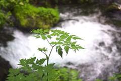 Water Pentax K-3 滝 軽井沢白糸の滝 Waterfall (tostomo) Tags: water pentaxk3 滝 軽井沢白糸の滝 waterfall