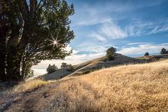 Summer Tam (Kirk Lougheed) Tags: bolinasridge california marincounty mounttam mounttamalpais mounttamalpaisstatepark mttam mttamalpais tamalpais usa unitedstates grass grassland hill landscape outdoor plant tree