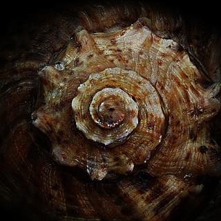 Texture 3 Sea Shell