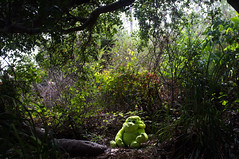 The green monkey (Catch the dream) Tags: capitola california monkey lonely toy green alone jungle