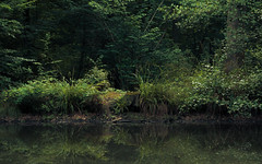 Fairies Disco (Netsrak) Tags: 7weiher abend atmosphäre baum bäume europa europe forst landschaft natur rheinland rhineland see seen sommer stimmung teich wald wasser atmosphere evening forest gelb green grün lake landscape mood nature pond summer tree trees water woods