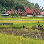 Toraja Utara