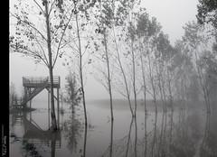 Mystic... (Felip Prats) Tags: mystic laselva estanysdesils boira foggy niebla