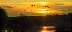 Taking The Early Flight. (Picture post.) Tags: landscape nature green water reflections geese clouds sky summertime trees paysage arbre eau sunrise
