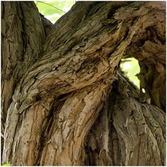 Texture of age (Brian Legg) Tags: wpg oldleggey garden priorypark southendonsea twelve
