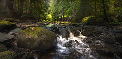 Reelig (Craig Robertson) Tags: reelig highlands scotland water woods trees moss
