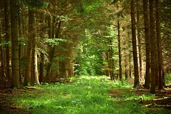 summer moods (JoannaRB2009) Tags: summer mood light shadow tree trees forest woods green nature hesse hessen path germany deutschland