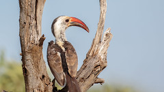 Tsavo West-8924 (ovg2012) Tags: kenia kenya tsavo tsavowestnationalpark
