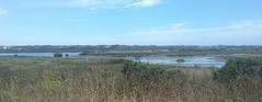 (sftrajan) Tags: coastline marsh california elkhornslough montereycounty カリフォルニア windshield