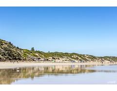 Reflections (red stilletto) Tags: oceangrove oceangrovebeach bellarinepeninsula summer reflection reflections seagull seagulls bird birds beach sea ocean