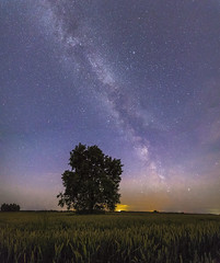 Clear skies (Augustas Kemežys) Tags: rokųseniūnija kaunoapskritis lithuania lt milky way galaxy sky night stars tree field lietuva astro astrophotography color lights nature