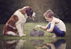 :: frogs, snails, & puppy dog tails :: (mjcollins photography) Tags: frogs snails puppy dog tails little boy outside saint bernard pond reflection