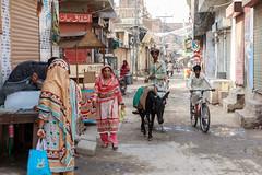 0F1A1351 (Liaqat Ali Vance) Tags: animal donkey women street life kot kamboh lahore google liaqat ali vance photography punjab pakistan