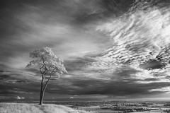 Lonely as a Cloud (littlenorty) Tags: blackwhite england europe fujixe1 gear infared landscape nature roundwayhill sunset type unitedkingdom wiltshire fuji14mm lonetree