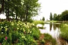 Mansikkalahti (m.pertti) Tags: ngc twop landscape nature sea water flowers summer kotka finland