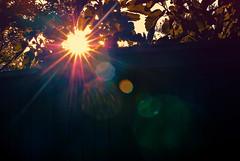 Fruits (Carrie McGann) Tags: sun sunflare sunburst fence leaves sunset 072517 nikon interesting