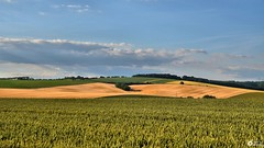 Source of energy 2 (aldonaszczepaniak) Tags: landscape transformer energy cereal