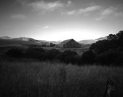 Barn on Stage Road (preston e davis) Tags: sinarnorma 4x5 largeformat ilfordfp4 epsonv700 pyrocathd
