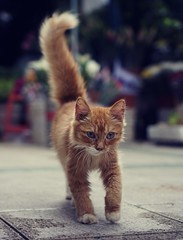 #cat #cats #kitten #猫 #貓 #고양이 #🐱 #🐈 #кот #gato #chat #แมว  #sel35f18 #sonya6000 #sonyalpha (andygz08) Tags: cat cats kitten 猫 貓 고양이 кот gato chat แมว sel35f18 sonya6000 sonyalpha
