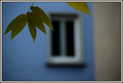 Window'z Bluez (Armin Fuchs) Tags: arminfuchs window leaf blue blues bluez green romantic jazz music art autumn november fineart