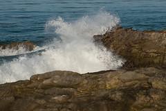 (RaffaLUCE) Tags: sealions animals bigwave crashingwaves pacificcoast fujixt1 malibu leocarillostatebeach