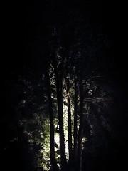 (txchris86) Tags: eyeem lights lichter baum baumkrone illuminated beleuchtet natur nature edited filter nightshot nachtaufnahme nacht night tree sommer summer lowlight spotlight