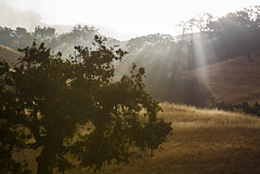 Misty Hill Morning (Life_After_Death - Shannon Renshaw) Tags: photography lifeafterdeath lifeafterdeathstudios lifeafterdeathphotography canon canoneos canoneos50d 50d eos dslr canondslr eosdslr canoneos50ddslr tree trees sun light sunlight beam beams outdoor landscape mist fog sunrise rise morning hill land grass wheat
