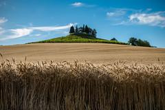 Collina monferina (AL) (Ondablv) Tags: coline monferrato cipressi collina campo campi giallo coltivato minimal coltivati ondablv clear colline