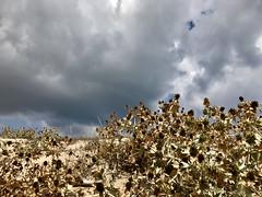 IMG_4852 (Massimo Cerrato) Tags: formentera iphone skies clouds macchiamediterranea mediterraneanscrub