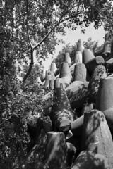 (Nikita Strizhov) Tags: чернобелое чб blackandwhite bw камни stones дерево tree волнорез breakwater monochrome 3 бетон concrete тень shadow