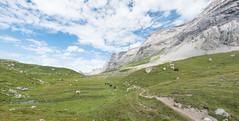 Derborence-Anzeidaz-4 (pichmoly.sun) Tags: derborence anzeidaz valais conthey suisse switzerland