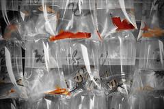 命 (Anna Kwa) Tags: goldfishmarket tungchoistreet mongkok kowloonpeninsula hongkong annakwa nikon d750 afsnikkor70200mmf28gedvrii my fate always destiny 命 seeing heart soul throughmylens 默 travel world lost