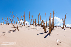Ghost Forest in Sleeping Bear Dunes (Craig - S) Tags: empire ghostforest leelanau michigan puremichigan sleepingbeardunes nationallakeshore lakemichigan greatlakes sand sanddunes sky blue white clouds scenic trees dead forest windswept ripples outdoors nature beautyinnature decay